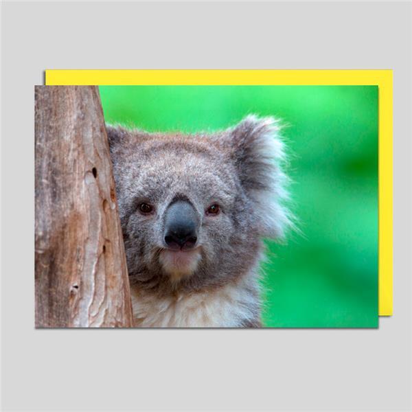 Fotokarte Koalabär