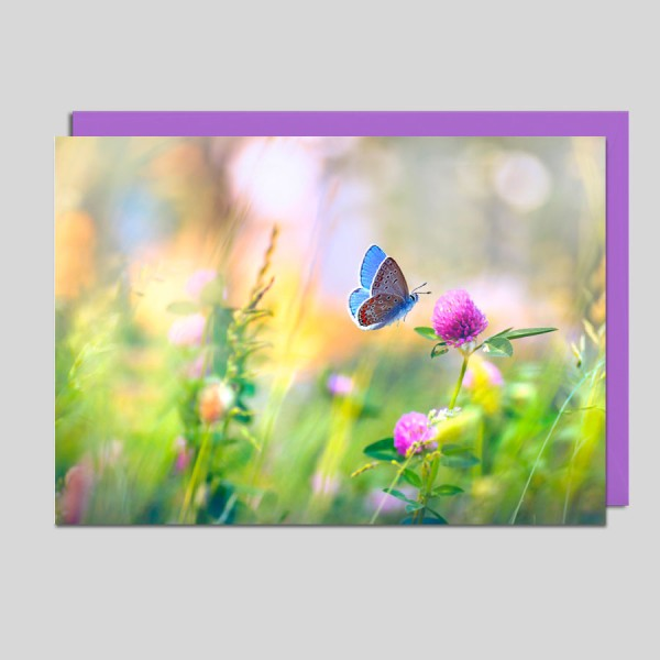Fotokarte Schmetterling