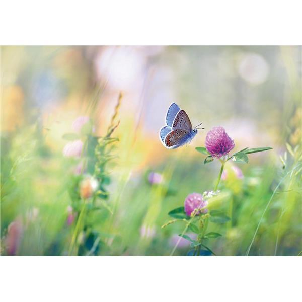 Midikarte Schmetterling