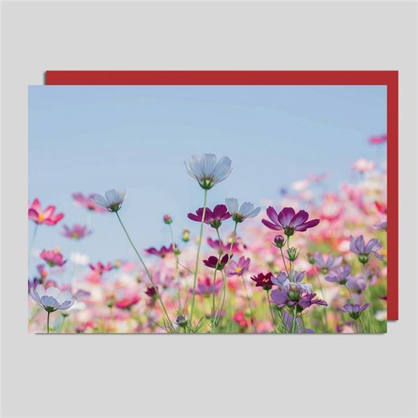 Fotokarte Blumenwiese