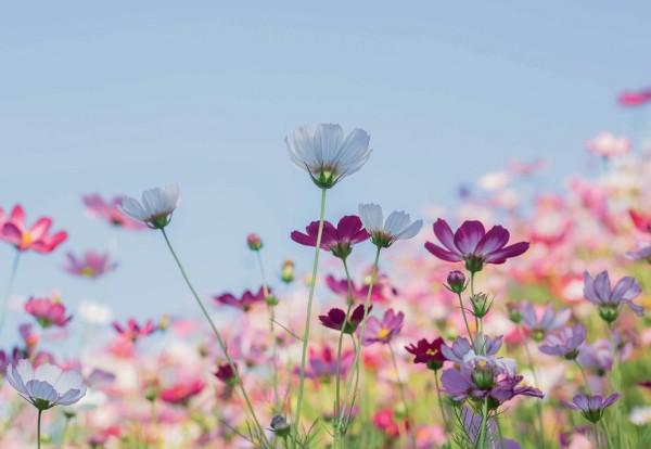Muko Blumeneingang UK-90114