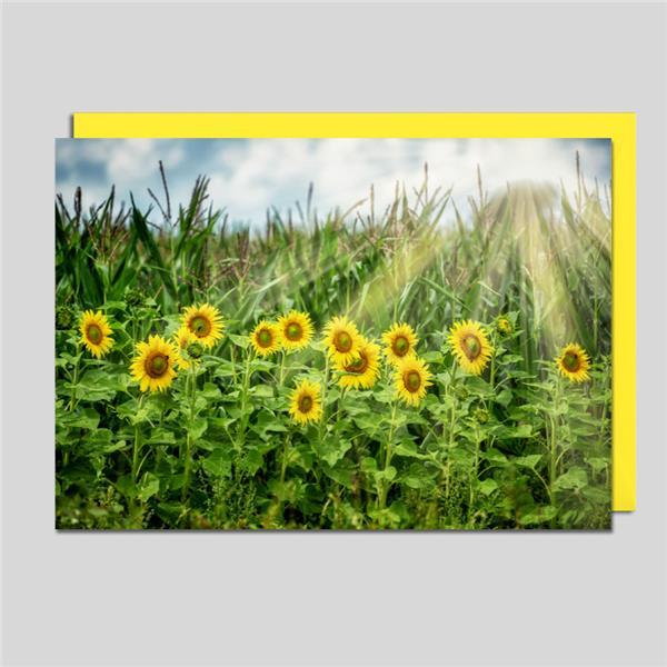 Fotokarte Sonnenblumen