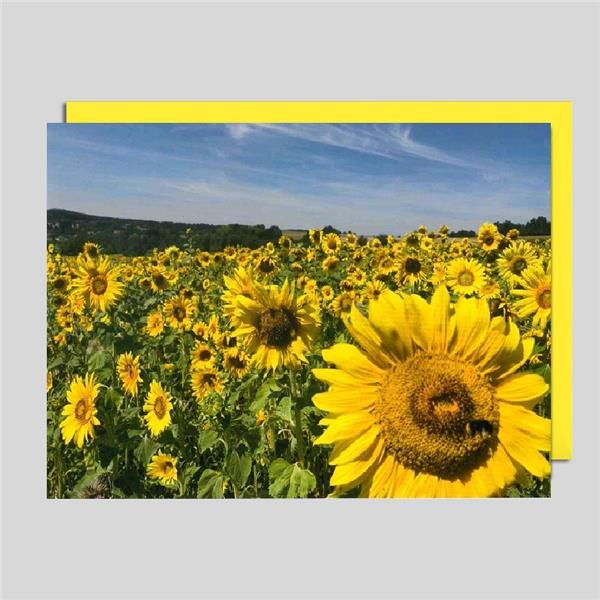 Fotokarte Sonnenblumenfeld