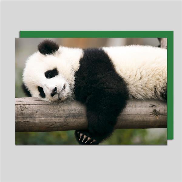 Fotokarte Pandabär