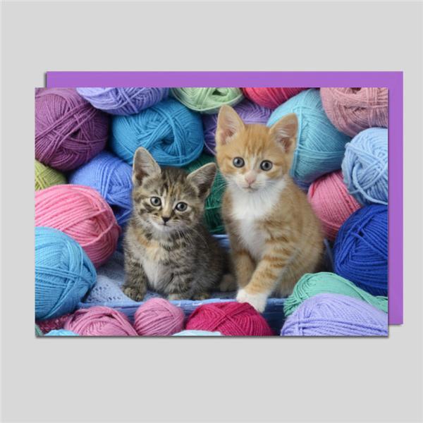 Midikarte Kätzchen