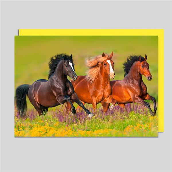 Fotokarte 3 Pferde