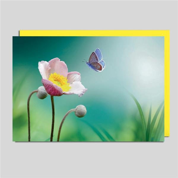 Fotokarte Blüte und Schmetterling