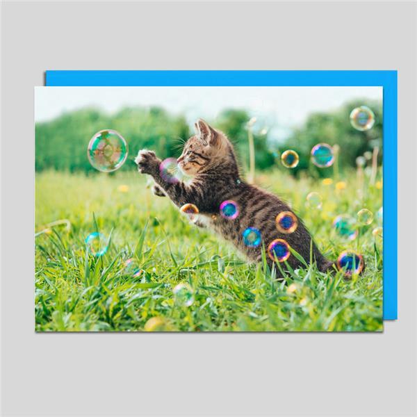 Fotokarte Kätzchen